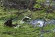 Cudze chwalicie… Rezerwat Końskie Błota w Nadleśnictwie Tuszyma