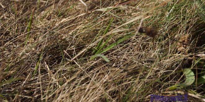 Weekendowa foto-łamigłówka – poszukaj na zdjęciach jaszczurki…